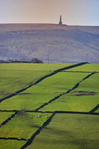 Upland pastures below Stoodley Pike
